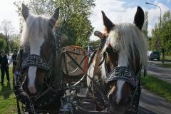Maibaum 2019: Feierlicher Einzug zum Rathausplatz mit einem Pferdefuhrwerk der Familie Kugelmann
